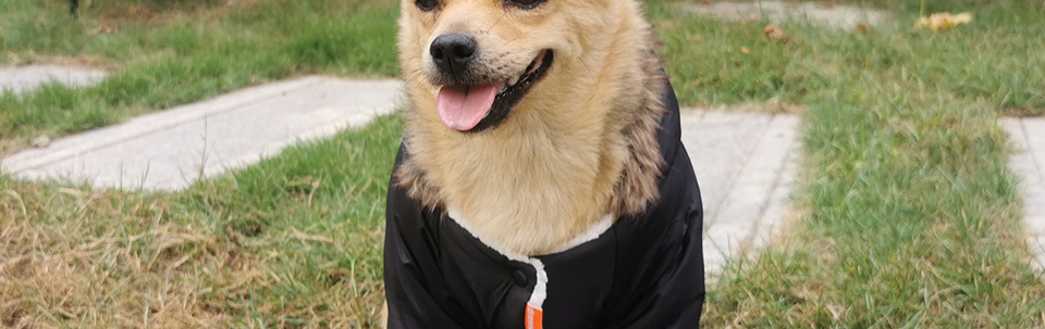 Warm Winter Pet Dog Clothes For Small Dogs Pets Puppy